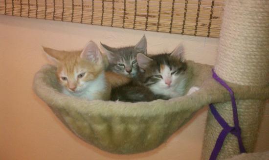 kittens-3-angel