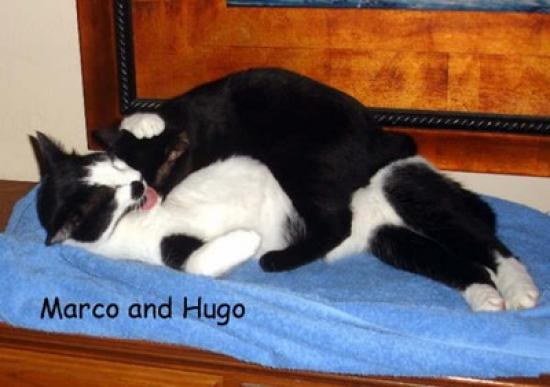 marco_and_hugo_aka_lunar