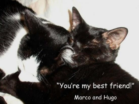 marco_and_hugo_aka_lunar_bff