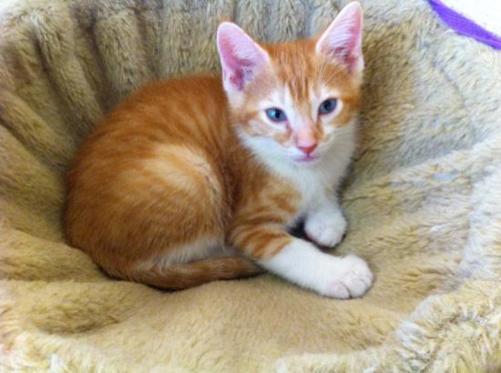 orange-kitten-angel