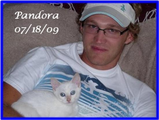 pandora-sweetie