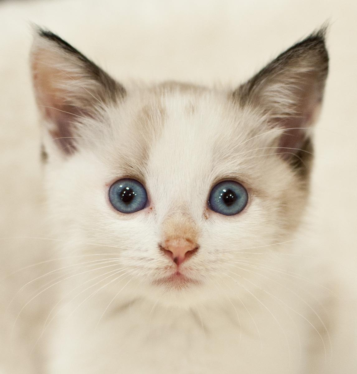 Discount Spay/Neuter   VSA Animal Rescue - Adoption - Foster